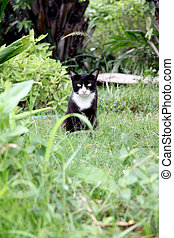 Black cat in the garden looking at it.