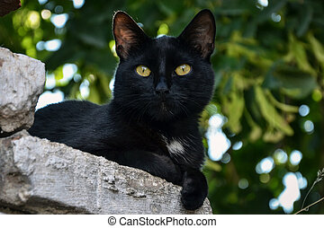 the black cat is resting on the wall