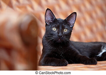 The black cat lies on a sofa.