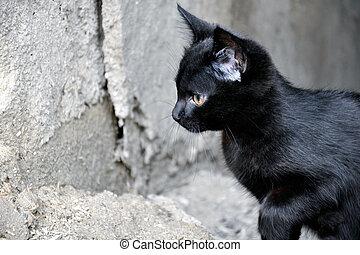 The black kitten preparing to jump - The little black kitten...