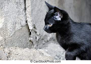 The little black kitten preparing to jump