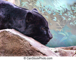 the black panter