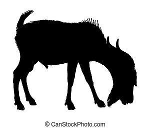The black silhouette of a billy goat on white