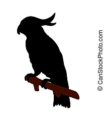 The black silhouette of a cockatoo on white