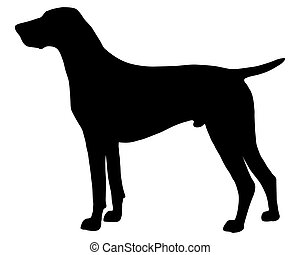 The black silhouette of a German Shorthaired Pointer