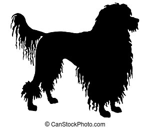 The black silhouette of a Portuguese Water Dog