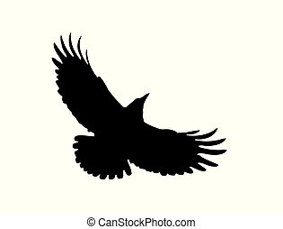 The Black Silhouette of a Rook. Flight of Dark Crow. Vector ...