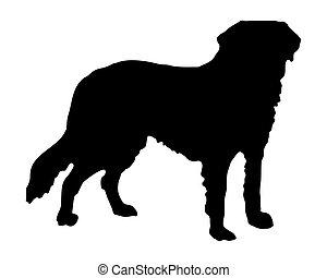The black silhouette of a Saint Bernard dog