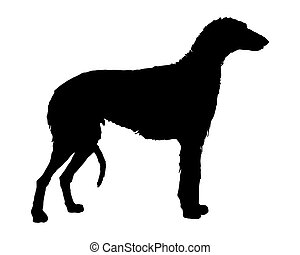The black silhouette of a scottish Deerhound