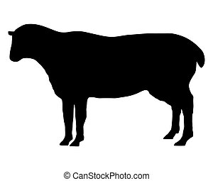 The black silhouette of a sheep on white