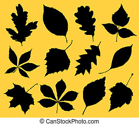 The black silhouette of leafs