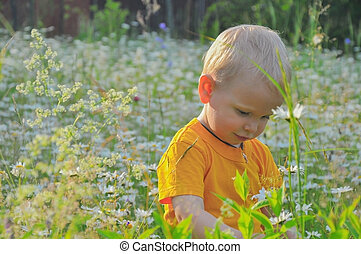the blonde little boy costs in a dense high grass where camomiles grow
