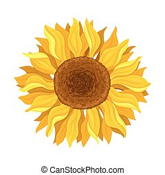 The Blooming Sunflower In The Round Centered Composition Vector Illustration