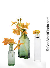 the Blooming yellow Ornithogalum Dubium in a transparent bottle instead vase