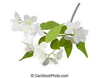 The blossoming season. Blooming tree with delicate white flowers. Twig with flower buds.