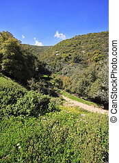 The blossoming spring nature. The mountain Meron - Footpath...