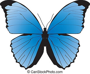 The blue butterfly on a white background