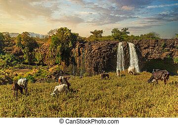 The Blue Nile Falls in Bahir Dar, Ethiopia