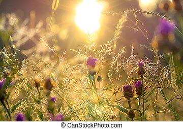 blurred  sunrise on a summer meadow