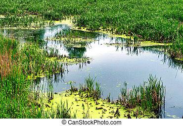 the bog - Summer view at bog background