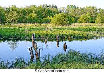 The bog - Bog in a spring season