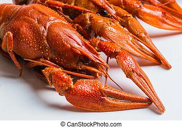 Boiled crawfish - The Boiled crawfish on a white background
