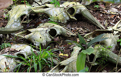 The bones of dead animals in the forest