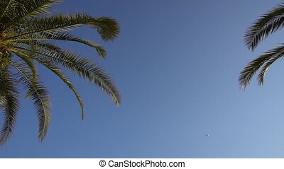 the bottom view of the palm trees and a plane flying in the sky