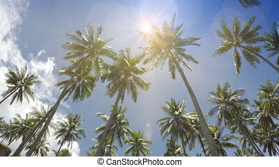 The bottom view on palm trees against the background of blue solar the sky with moving white clouds