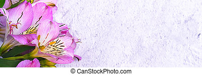 The bouquet of orchids is beautiful, fresh, bright lilac on a light background.