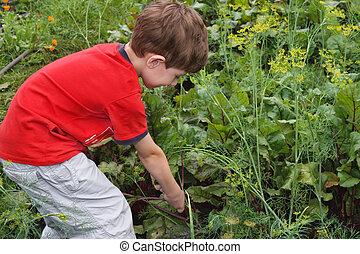 The boy in a garden