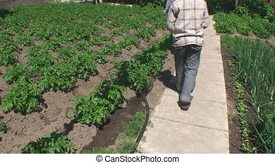 The boy in the Garden watering water the young shoots of potatoes