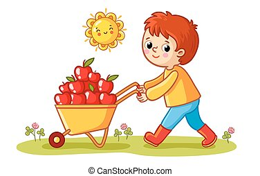 The boy rolls a wheelbarrow with apples.