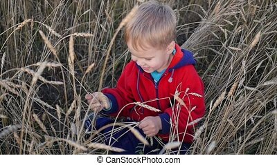 The boy sits on a wheat field. Entertainment and outdoor walks