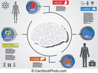 the brain in the heart and organs around with silhouettes