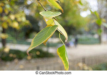 The Branch Of A Birch