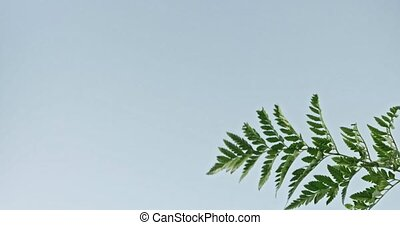 The branch of an green fern plant swings slowly on a blue...