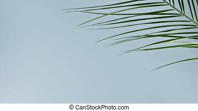 The branch of an green tropical palm tree swings slowly on a...