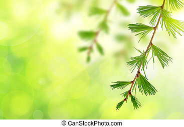 The branch of larch