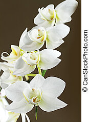 The branch of orchids.