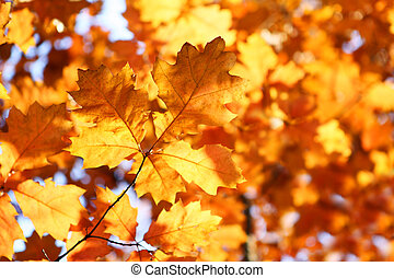 the branch of yellow autumn leaves
