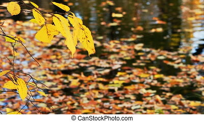 The branch sways in the wind over the water