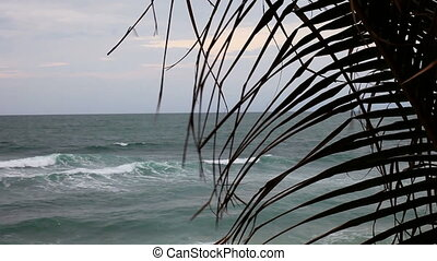 the branches of a palm tree on background of ocean