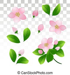 The branches of flowering cherry or apple. Pink spring flowers and young green leaves.Isolated on a transparent background. Vector illustration .EPS10.