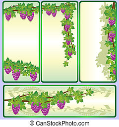 The branches of grapes-1 - Vine with bunches of grapes....
