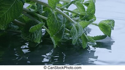 The branches of green mint fall into the water. Slow motion...