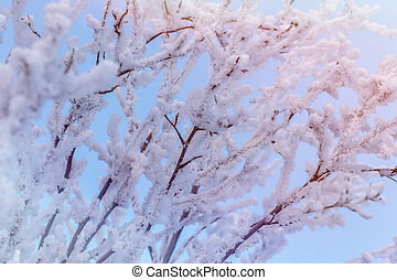 The branches of the shrub are covered with snow against a blue sky with a Sunny glow.