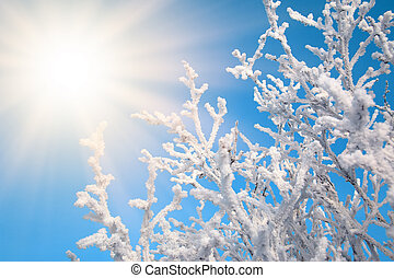 The branches of the trees are covered with snow against the blue sky with sunlight. Clear frosty winter day.