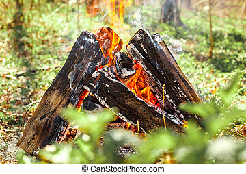 campfire on nature