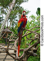 The bright macaw on a branch of a tropical tree